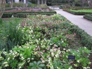Ботанический сад в Мадриде-1