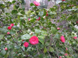 Ботанический сад в Мадриде-16