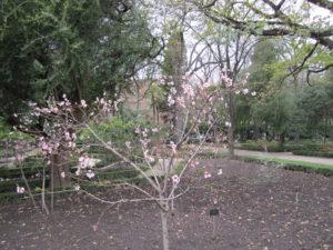 Ботанический сад в Мадриде-18