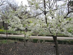 Ботанический сад в Мадриде-2