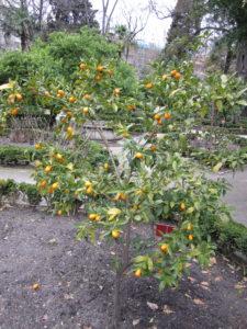 Ботанический сад в Мадриде-4