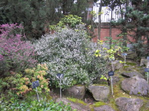 Ботанический сад в Мадриде-6