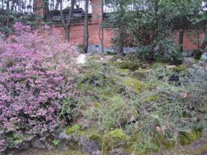 Ботанический сад в Мадриде-13