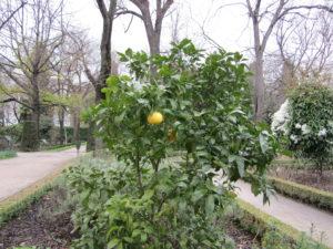 Ботанический сад в Мадриде-5