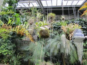 Ботанический сад в Мадриде-7