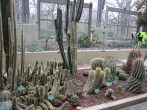 Ботанический сад в Мадриде-19