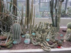 Ботанический сад в Мадриде-3