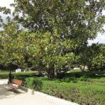 Ботанический сад в Мадриде-12