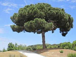 Ботанический сад Барселоны-4