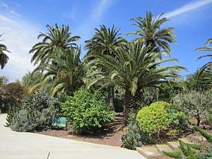 Ботанический сад Барселоны-9