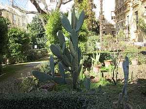 Ботанический сад в Гранаде-2