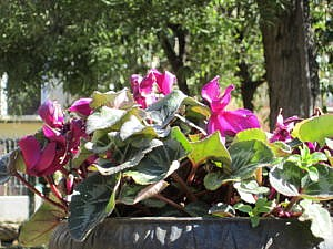 Ботанический сад в Гранаде-8