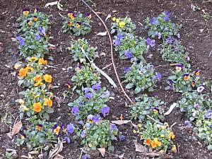 Ботанический сад в Гранаде-7