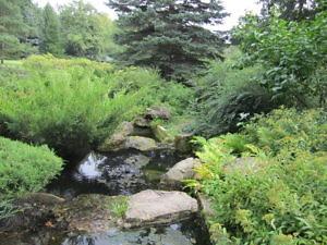 Японский сад Главного ботанического сада РАН-8