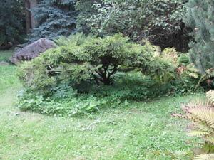 Японский сад Главного ботанического сада РАН-4