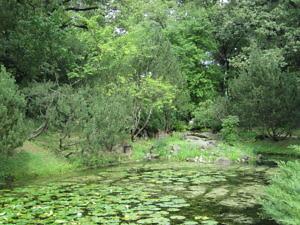 Японский сад Главного ботанического сада РАН-7