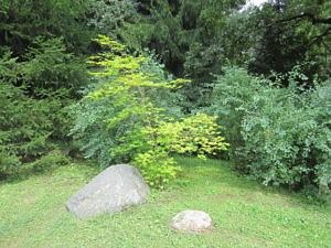 Японский сад Главного ботанического сада РАН-5