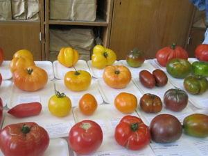 Выставка Дары садов и виноградников Подмосковья-2