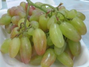 Выставка Дары садов и виноградников Подмосковья-3
