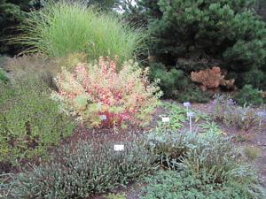 Ботанический сад в Праге-5