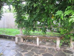 Японский сад Пражского Ботанического сада-3
