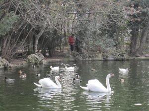 Пруд в парке Campo Grande